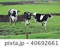 牛 40692661