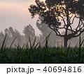Silhouette Big Tree 40694816