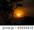 Tree behind The Sun 40694819