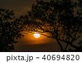 Tree behind The Sun 40694820