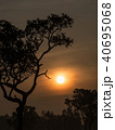 Tree behind The Sun 40695068