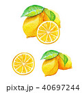 レモン|水彩画 40697244