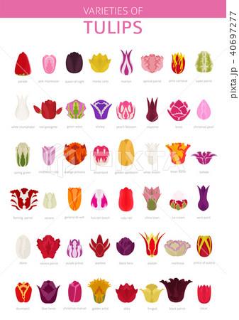 Tulip varieties flat icon set. Garden infographic 40697277