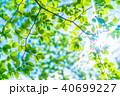新緑エコイメージ 40699227