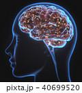 脳みそ エックス線 マインドのイラスト 40699520
