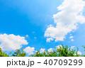 青空と若葉とわた雲 40709299