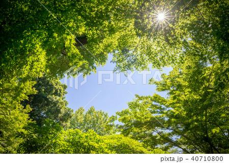 新緑の木々と青空 40710800