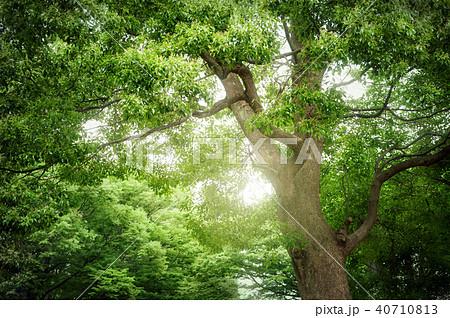 常緑樹、エコロジーイメージ 40710813