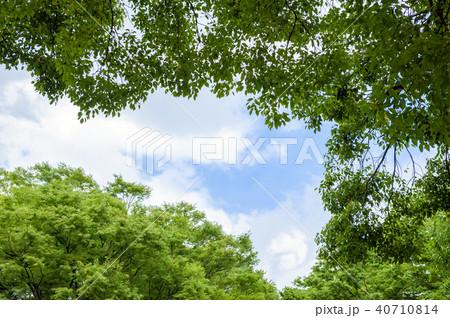 新緑の木々と青空 40710814