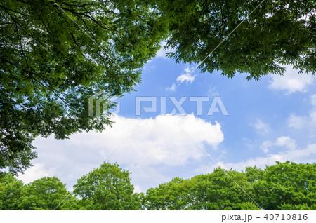 新緑の木々と青空 40710816