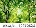 新緑 木 樹木の写真 40710828