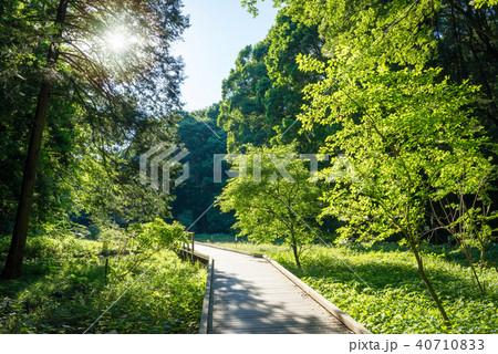 森の中のハイキングトレイル 40710833