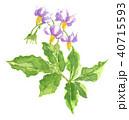 水彩画 花 ジャガイモのイラスト 40715593