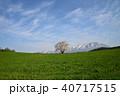 桜 一本桜 エドヒガンの写真 40717515