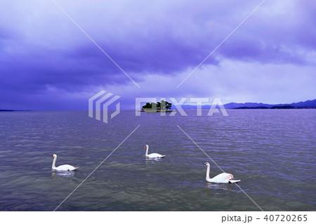 宍道湖(しんじこ)と白鳥の写真 40720265
