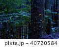 ヒメボタル 蛍 夜景の写真 40720584