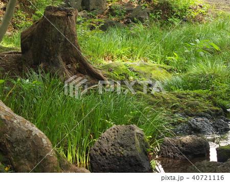 火山岩の間から湧き出る湧水 40721116