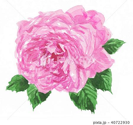 rose18522pix7 40722930