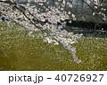 花筏 桜 目黒川の写真 40726927