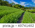 富士山 茶畑 富士市の写真 40741402