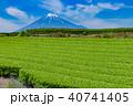 富士山 茶畑 富士市の写真 40741405