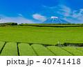 富士山 茶畑 富士市の写真 40741418