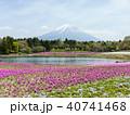 富士山 芝桜 山の写真 40741468
