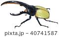 ヘラクレスオオカブト 40741587