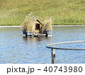 習志野市サクラ広場のカルガモ池の巣箱 40743980