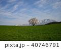 桜 一本桜 古木の写真 40746791