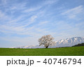 桜 一本桜 古木の写真 40746794