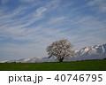 桜 一本桜 古木の写真 40746795