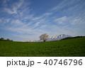 桜 一本桜 古木の写真 40746796