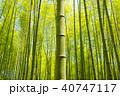 竹林 竹 和の写真 40747117