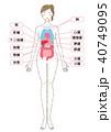 身体の内蔵イラストパーツ 40749095