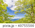 山 富士山 葉の写真 40755500
