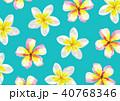 プルメリア 花 花柄のイラスト 40768346