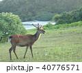 シカ 鹿 40776571