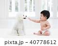 赤ちゃんと白いトイプードル 40778612
