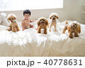 ベッドの上の赤ちゃんとトイプードルたち 40778631