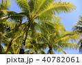 フィリピン パンゴラオ 青空バックのヤシの木 40782061