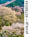 桜 花 春の写真 40788544