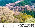 桜 花 春の写真 40788545