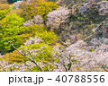 桜 花 春の写真 40788556