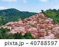 桜 花 春の写真 40788597