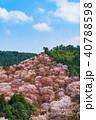 桜 花 春の写真 40788598