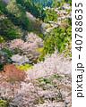 桜 花 春の写真 40788635