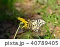 キアゲハ 蝶 花の写真 40789405