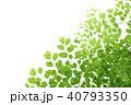 アジアンタム 40793350