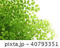 アジアンタム 40793351